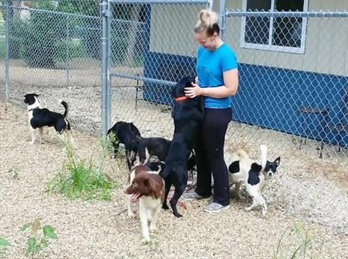 Cedar Bend Humane Society   Pets in Need