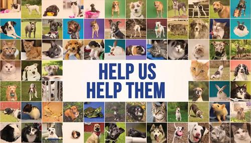 CBHS Pets Please Help Us Help Them