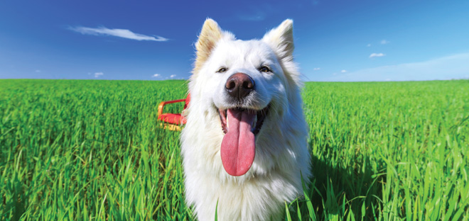 White dog in grass